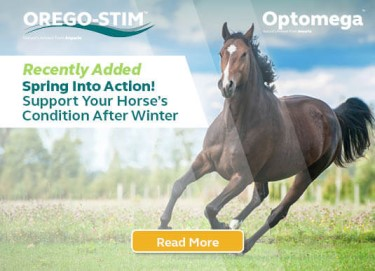 Spring Into Action! Support Your Horse's Condition After Winter!
