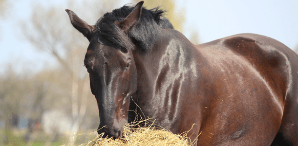Hot Topic: Why Is Gut Health Important For Your Horse?