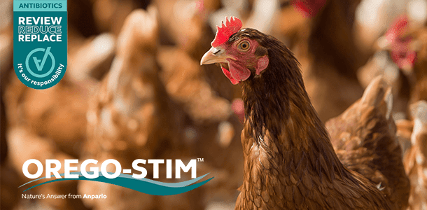 Case Study: Orego-Stim Reduces Faecal Egg Count in Cage-Free Laying Hens